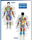 Chest Workout Professional Fitness Gym Instructional Wall Chart Poster (Co-Ed Edition) - Fitnus Corp.