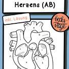 Der Aufbau des Herzens inkl. Lösung