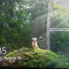 First time I see a dog on my windows login screen