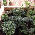 Patio Herb Gardens