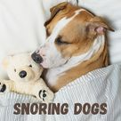 Tired of Your Dog Snoring? (Expected Reasons, Prevention)