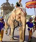 'A white elephant' - the meaning and origin of this phrase
