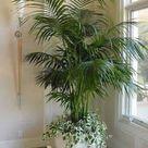 Bathroom plants that absorb moisture   Miss M.V.