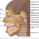 Dental Knowledge on Twitter