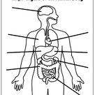 Printable Human Body Worksheet