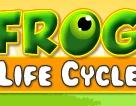 Frog Life Cycle   Animal Game