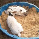 Buddelkisten für Kaninchen - Haltung, Pflege, Verhalten