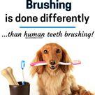 See How To Brush Dog Teeth (It's Not Like Brushing Human Teeth!)