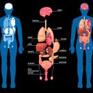 Human anatomy layout of internal organs in male body isolated on black background vector illustration