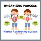 Breathing Process for Primary School