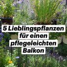 5 Lieblingspflanzen für einen pflegeleichten Balkon