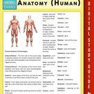 Anatomy Human Speedy Study Guides