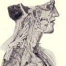 Sympathetic Nervous System Human Anatomy Vintage Medical Chart 1920s Illustration To Frame Black & White