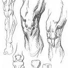 Art Book Constructive Anatomy by George Bridgman