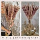 22-27 inches Tall 30 Stems Natural Dried Brown Tabletop Pampas Grass   Boho Rustic Decor for Interio