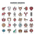 Download Human Organs Thin Line icons for free