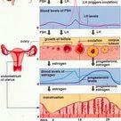 Gynecology & Obstetrics Flashcards   Chegg.com