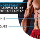 Abdominal Encyclopedia Core Anatomy And Effective Training
