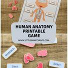 Printable Human Anatomy Game Human Body Printable