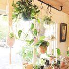 Pflanzenaufhängung vorm Fenster