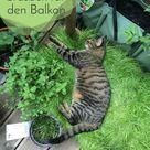 Katzen-Grasbox für den Balkon herstellen | Frag Mutti