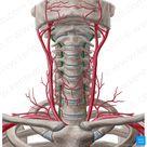 Longus colli muscle