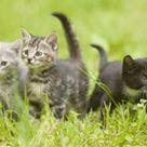 Neonatal Kittens