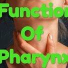 function of the pharynx