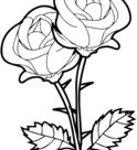 Roses coloring page | Free Printable Coloring Pages