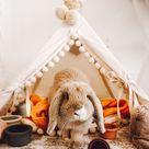 Rabbit Subscription Box of Toys, Treats & Gifts   Happy Bunny Club