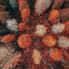 Fall Wallpaper For Iphone - Sure To Have You Feeling The Autumn Season - Emerlyn Closet