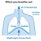 Why do you breathe   British Lung Foundation