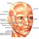 Facial Fitness - Eva Fraser