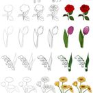Floral study by Precia-T on DeviantArt