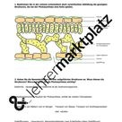 Photosynthese: Beteiligte Strukturen – Unterrichtsmaterial im Fach Biologie