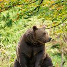 Of Bears