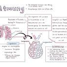 Die Atmung im Überblick - Biologie