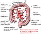 Abdomen   Vessels   Arteries   Superior mesenteric