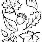 Ausmalbild: Herbstblätter und Eichel | Ausmalbilder kostenlos zum ausdrucken