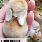 I love rabbit 🐇  lovely animal