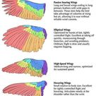 Detailed guide to different types of bird wings and their functional parts
