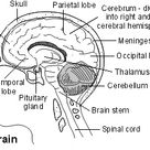 Brain Tumours & Cancer | Signs, Symptoms, Types and Treatment