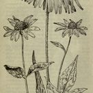 Field book of American wild flowers   Biodiversity Heritage Library