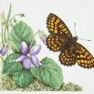 1000 Piece Puzzle. Heath Fritillary butterfly (Melitaea athalia)
