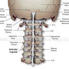 Cervical Spine Injuries Literature Reviews - Journal of Prolotherapy