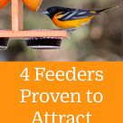 4 Feeders Proven to Attract Orioles
