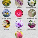 10 Winterblumen- Blütenpracht im Winter
