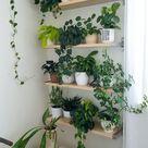 Pflanzenwand, Zimmerpflanzen, Dekorieren mit Pflanzen, Pflanzenregale, Pflanztö… – 2019 - Apartment Diy