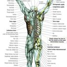 * Stretching: Stretching the Back -- Grab the bar and hang, and think about relaxing your body compl