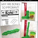 Teaching the Skeletal System - Babbling Abby